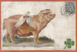 Carte Postale Cochon Tirelire Porc Beau Plan - Varkens
