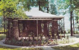 CPA - USA - Kokomo Sycamore Stump - Indiana - Etats-Unis