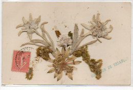 BRIANCON (Souvenir) -  Montage  Fleurs (Edelweiss) Naturelles Collées  (83192) - Briancon