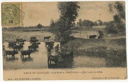 Valle De Cavallos Chamusca Gado Depois Da Bebida 804 Martins Lisboa Coll. JM De Carvalho Used To Valladolod - Santarem