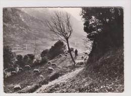 CPSM Grand Format - VALLS D ANDORRA LA VELLA CONTRALLUM VALLEES D ANDORRE LA VIEILLE CONTRE JOUR BERGER TROUPEAU MOUTON - Andorre