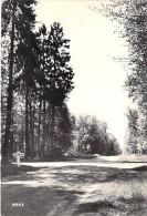 60 - LA CROIX SAINT OUEN - En Forêt De Compiègne : Les QUATRE SAPINS - CPSM Dentelée Noir Blanc Grand Format - Oise - France