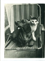 CP - Teckel Et Chat - Hunde