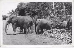 ELEPHANTS - Elephants