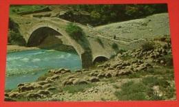 Images De Provence , La Transhumance ::: Animaux - élevages - Agriculture - Fermes - Moutons  ---------- 339 - Crías
