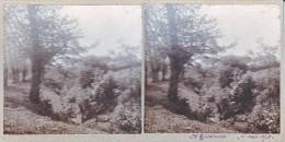 Vieille Photo Stereoscopique  Wierre Effroy Sainte Godelaine Mai 1925 Petit Ruisseau Scene Champetre - Stereoscopic