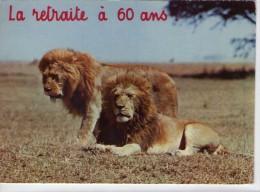 """Lions.. Animaux.. Lion Lionne Humour """"la Retraite à 60 Ans"""" Réserve Savane Brousse - Lions"""