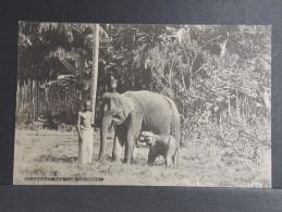 CEYLAN - Eléphant Et Son Petit - P 15188 - Sri Lanka (Ceylon)