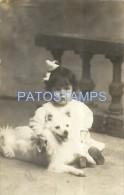 27435 REAL PHOTO GIRL EMBRACING A DOG POSTAL POSTCARD - Postcards