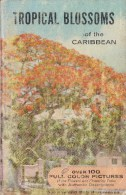 Tropical Blossoms Of The Caribbean - Livre D'occasion - Jardinage