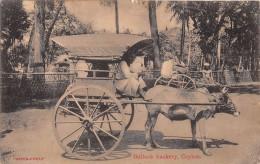 ¤¤  -   SRI LANKA   -  CEYLON   -  Bullock Hackery   -  Attelage De Boeuf   -  ¤¤ - Sri Lanka (Ceylon)
