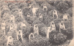 ¤¤  -   SRI LANKA   -  CEYLON   -  Cueillette Du Thé   -  Femmes Au Travail  -  ¤¤ - Sri Lanka (Ceylon)