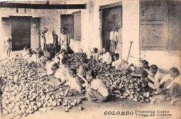 ¤¤  -   SRI LANKA   -  CEYLON   -  COLOMBO   -   Triage Du Cophra  -  Preparing Copra  -  ¤¤ - Sri Lanka (Ceylon)