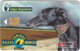 25538 -telecarte Telephonique -galgo Espanol -razas Caninas Ibericas -N° 9 Telephonica -levrier Greyhound - Chiens