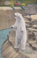 Polar Bear Pit Forest Park Zoo Saint Louis Missouri