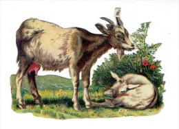 Chromo Découpi - Chèvre Et Chevreau - Animaux