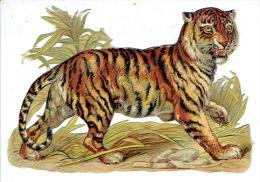 Grand Chromo-découpi (12 X 8 Cm) - Tigre - Animaux