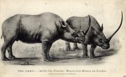PARIS Jardin Des Plantes Rhinoceros Blancs Du Soudan - Rhinocéros
