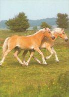 HORSES / PFERDE / CHEVAUX /  POSTCARD UNUSED    ( H  3072  / - Pferde