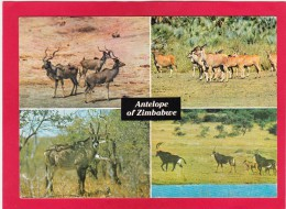 Multi View Card Of Antelope Of Zimbabwe,Posted With Stamp, B21. - Zimbabwe