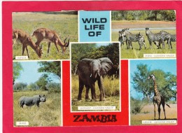 Multi View Card Of Wild Life Of Zambia,Posted With Stamp, B21. - Zambia