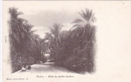 Algeria Biskra Allee Du Jardin Landon - Biskra