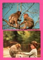 5 Cartes De La Forêt Des Singes - Roc-Amadour - La Montagne Des Singes - Alsace - CAP-THEOJAC - Monos