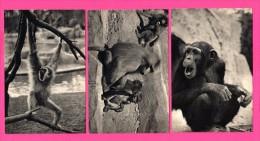 3 Cartes Singes Au Parc Zoologique Du Bois De Vincennes - Chimpanzé - Gibbon - Singes Hamadryas - DRAEGER FRÈRES - Singes