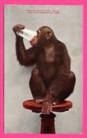 Chimpanzee Baldy - Chimpanzé - New York Zoological Park - QUADRI-COLOR Co - NYZP Bear This Imprint - Monos