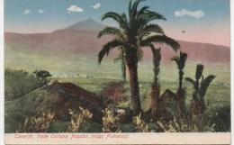 TENERIFE  VALLE OROTAVA NOPALES  VULGO FEMERAS - Tenerife