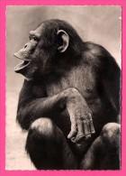 Chimpanzé De Profil - Édition SUPERLUXE - L.R. SEMFLEX - 410 - Monos