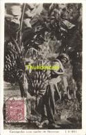 CARTE DE PHOTO  MAXIMUM CARD BRASIL BRESIL CARREGADOR COM CACHO DE BANANAS 1935 - Brieven En Documenten