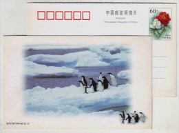 China 1999 New Year Greeting Pre-stamped Card Antarctic Penguin - Altri