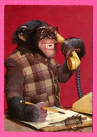 Humour - Singe Avec Lunette Au Téléphone - Secrétaire - KRUGER - Monos