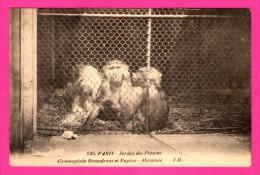 Paris - Jardin Des Plantes - Singes - Cynocephale Hamadryas Et Papion - Abyssinie - L. BOISSON - J.H. - Monos