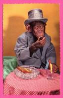 Humour - Singe Humanisé En Costume Avec Chapeau Haut De Forme Fumant Le Cigare - Cigares - Épingles - PHOTOCHROM - Monos