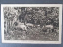 NOUVELLES HEBRIDES POCCAS A DENTS OUALA - Postcards