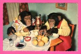 Humour - Couple De Singes à Table - Repas Familial - Lampe à Pétrole - A KIENER - Monos