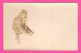 Carte Photo - Singe - Chimpanzé - Édition De La SOCIÉTÉ LUMIÈRE - Carte Postale - Monos