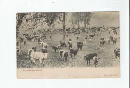 AUSTRALIA OVERLANDING CATTLE - Australie