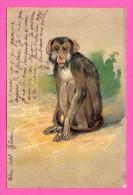 Fantaisie - Carte Gaufrée - Relief - Singe - 1903 - Couleurs - Monos