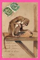 Fantaisie - Carte Gaufrée - Relief - Singe Sur Une Poutre Qui Joue Avec Un Scarabée - 1904 - Monos