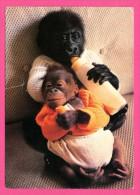 Zoo De La Palmyre - Noel Bébé Gorille Et Jotto Bébé Orang-outang Né Au Zoo En 1987 - 1992 - Monos