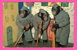 Carte Humour - Singes Militaires Avec Carabines - Fusils - A. KIENER - 1967 - Monos