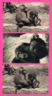 Parc Zoologique Du Bois De Vincennes - 3 Cartes - Chimpanzés - Famille De Singes Hamadryas - DRAEGER Frères - Monos