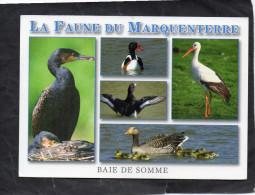 Baie De Somme - La Faune Du Marquenterre - Multivues - Non Classés