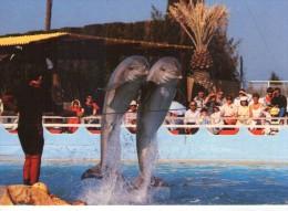 Dauphins.. Animée Marineland Côte D´Azur Antibes Poissons - Delfini