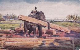 ELEPHANT AT WORK. TUCK OILETTE  8902 - Elephants