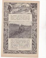 VECCHIA PUBBLICITA´ - ADVERTISING - TRATTORE - TRATTRICE AGRICOLA FIAT - ANNO 1913 - Trattori