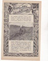 VECCHIA PUBBLICITA´ - ADVERTISING - TRATTORE - TRATTRICE AGRICOLA FIAT - ANNO 1913 - Tracteurs